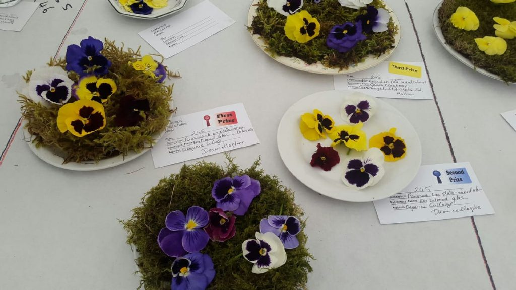 Charleville Show Success – The Organic College