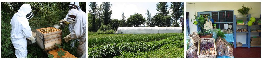 Quality courses on organic growing and sustainable living skills in County Limerick, Ireland