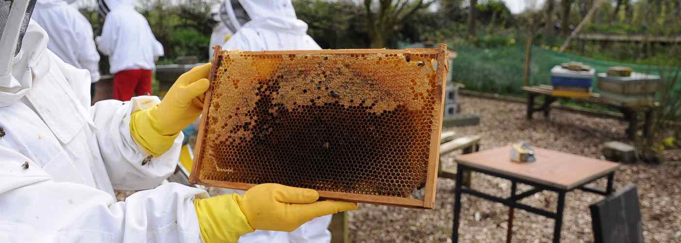 Sustainable living and bee keeping